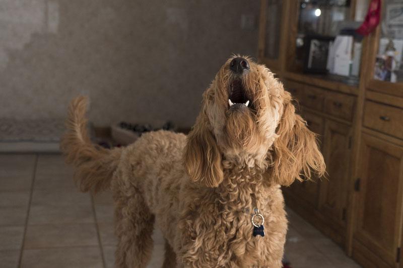 multas por ladridos en perros
