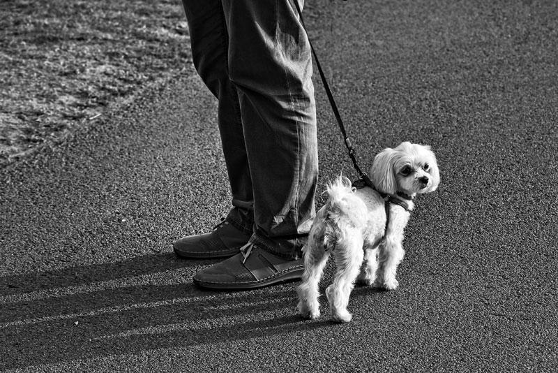 normativa sobre la presencia de animales en la comunidad de vecinos
